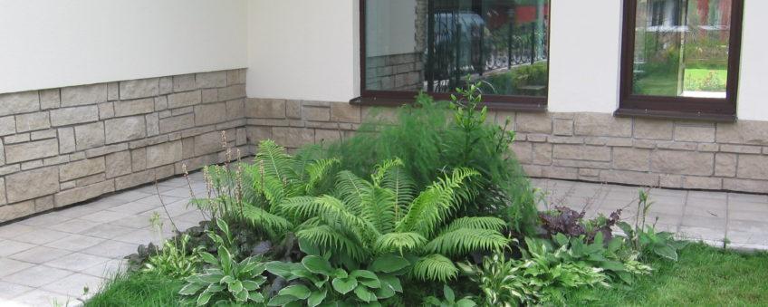 благоустройство территории коттеджа: кустарники