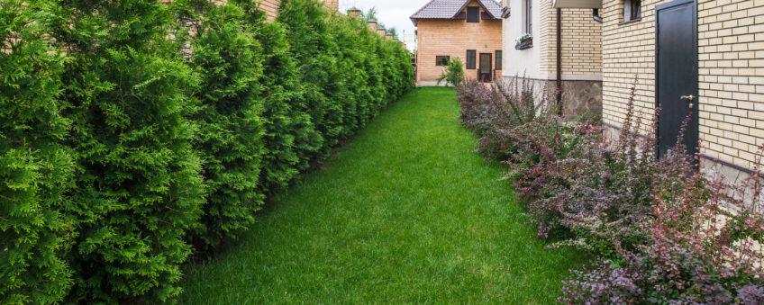 Ландшафтный дизайн бизнес-класса: газон, деревья, кустарники