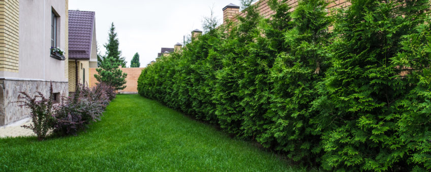 Ландшафтный дизайн бизнес-класса: газон, крупномеры