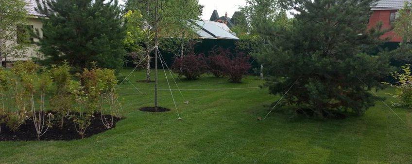 озеленение участка: газон, высадка деревьев