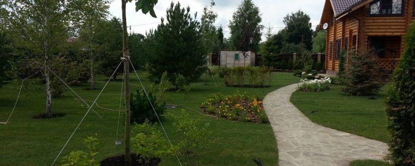 озеленение участка: газон, дорожки