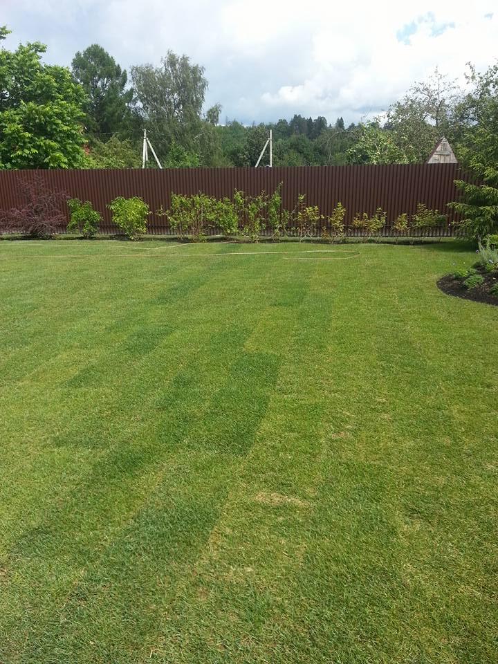 рулонный газон на участке дачи после укладки и полива