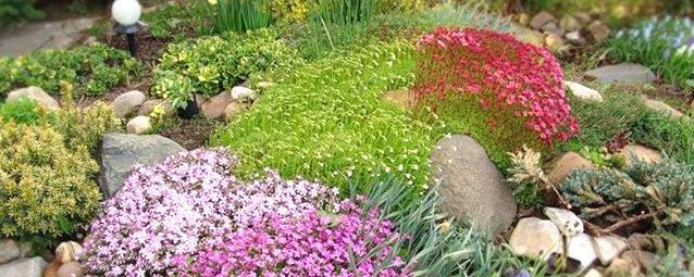 ландшафтное озеленение: цветы, кустарники
