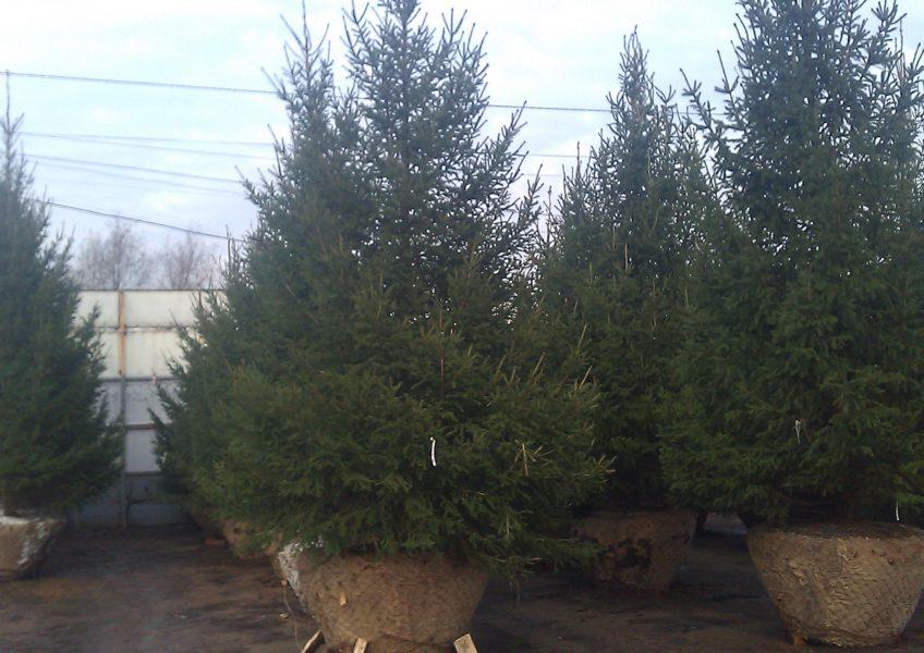 посадка деревьев на участке 12 соток