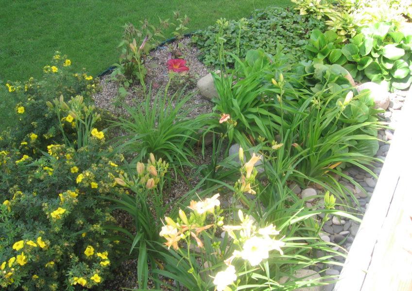 ландшафтный дизайн 12 соток: посадка цветов
