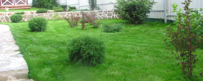 ландшафтный дизайн эконом класса: газон