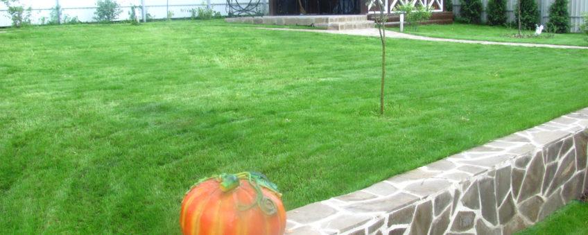 ландшафтный дизайн эконом класса: укладка газона