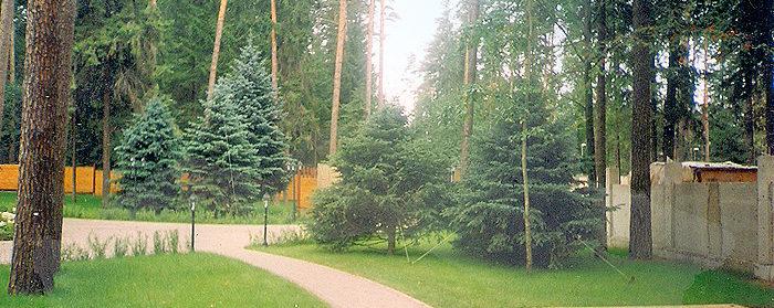 озеленение парка отдыха