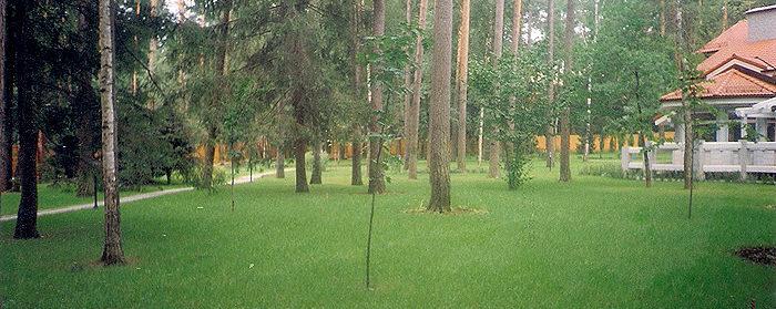 озеленение парка: газон