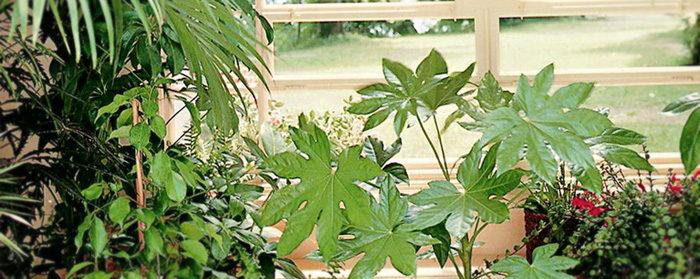 озеленение зимнего сада: цветы