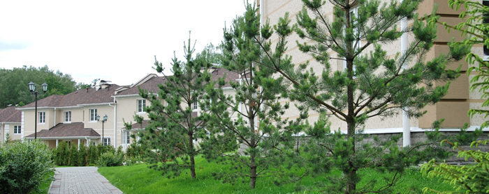озеленение участка сада
