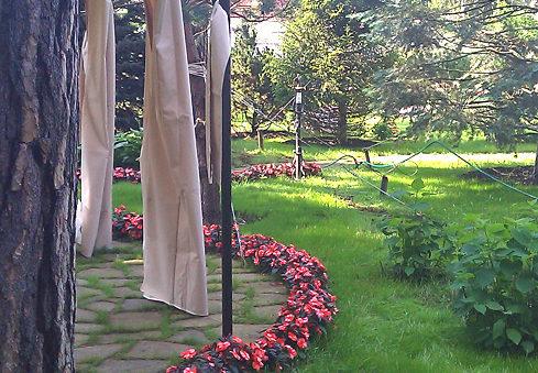 озеленение участка: газон, цветы