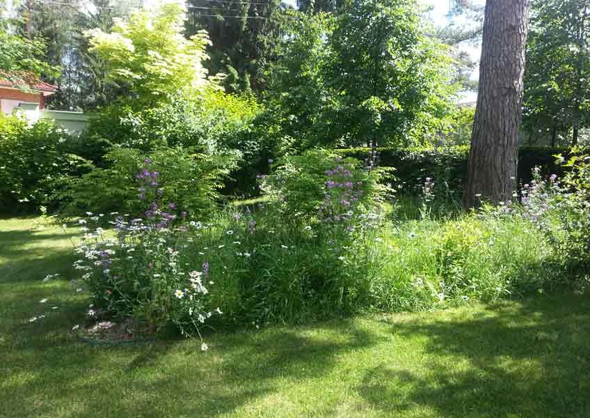 ландшафтный дизайн загородного дома: кустарники и деревья