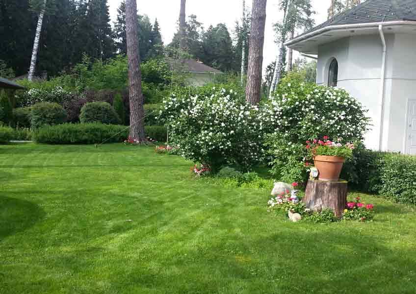 ландшафтный дизайн загородного дома: укладка газона