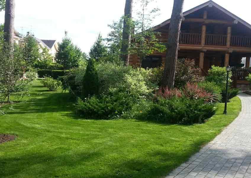 озеленение загородного дома: газон, кустарники