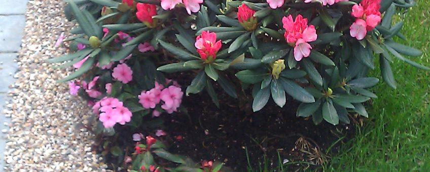 благоустройство дачного участка: цветы