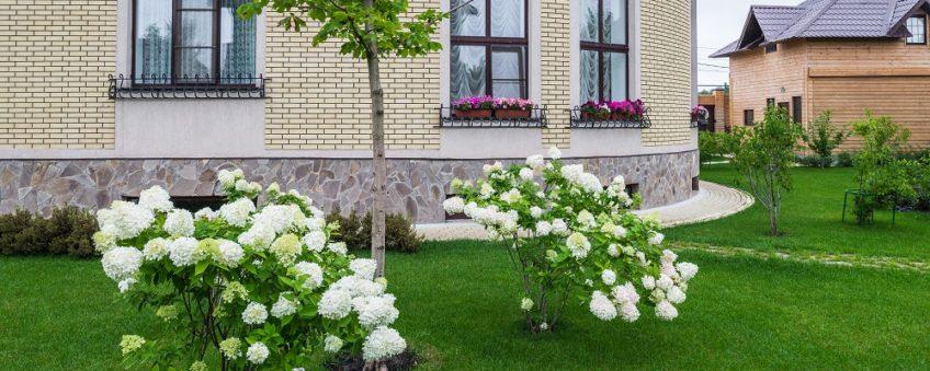декоративное озеленение: кустарники