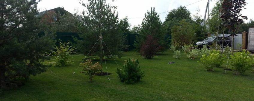 озеленение участка: газон, деревья
