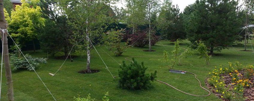 озеленение участка: газон, кустарники, крупномеры