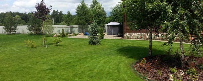 озеленение участка: газон