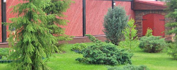 озеленение участка коттеджа