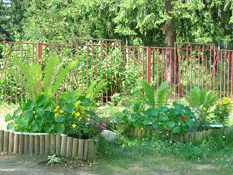 портфолио озеленения детского сада