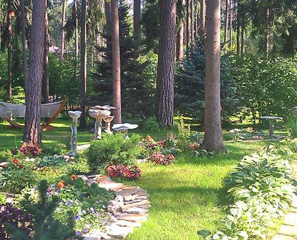 озеленение участка: газон, крупномеры