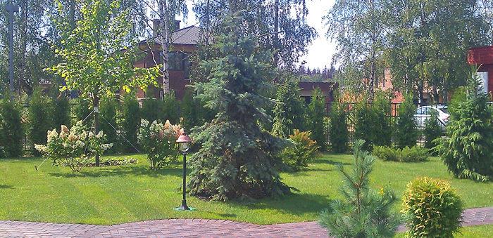 озеленение участка: деревья
