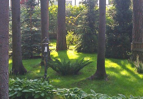 озеленение участка: кустарники, деревья