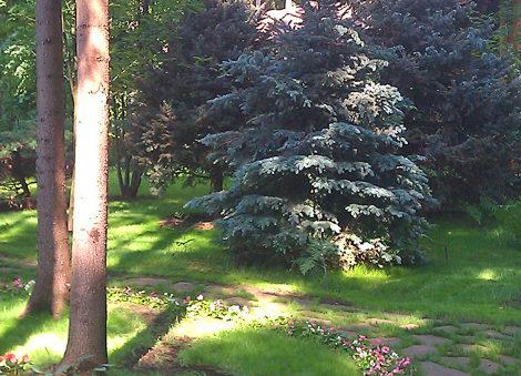 озеленение участка: высадка крупномеров