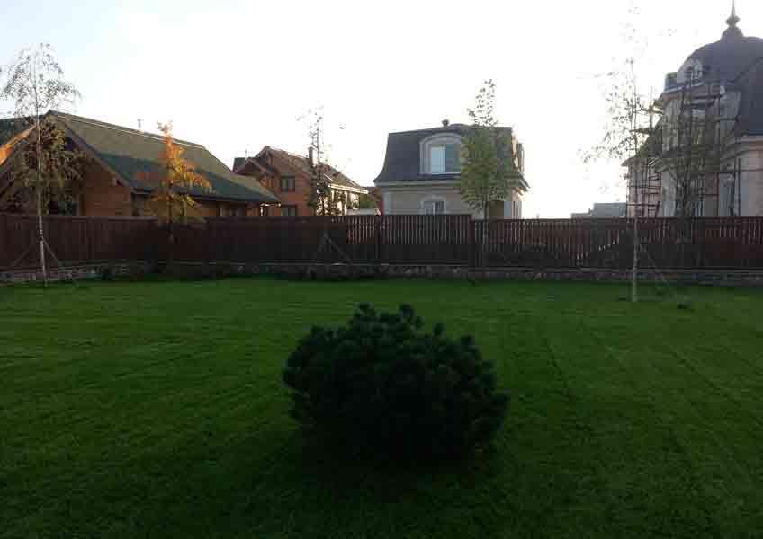 озеленение участка 20 соток: газон, посадка деревьев